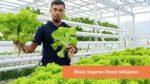 Cara Jualan Sayuran Online untuk Pemula